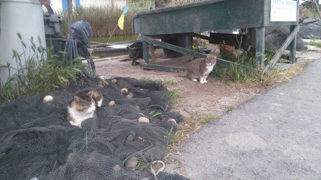 Les chats aux cabanes